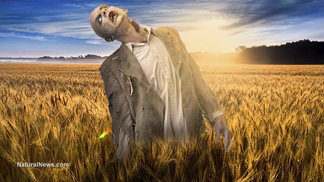 Undead-Zombie-Wheat-Field